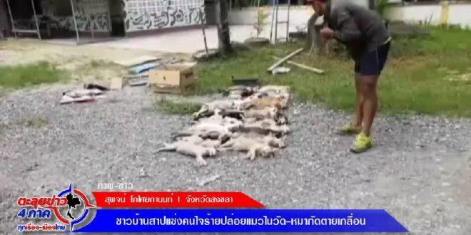 สงขลา – ชาวบ้านสาปแช่งคนใจร้ายปล่อยแมวในวัด-หมากัดตายเกลื่อน