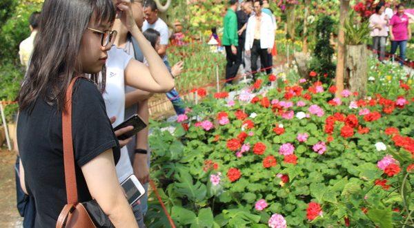 เริ่มแล้วเทศกาลดอกไม้บานที่เบตง 2019 ตระการตากับดอกทิวลิปหลากสี มีนักท่องเที่ยวทั้งชาวไทยและชาวมาเลเซีย สิงคโปร์ เข้าร่วมชมความงามอย่างต่อเนื่อง