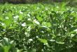 ผักน้ำเบตง พืชเศรษฐกิจ ได้ประโยชน์ทั้งอาหารและการท่องเที่ยว